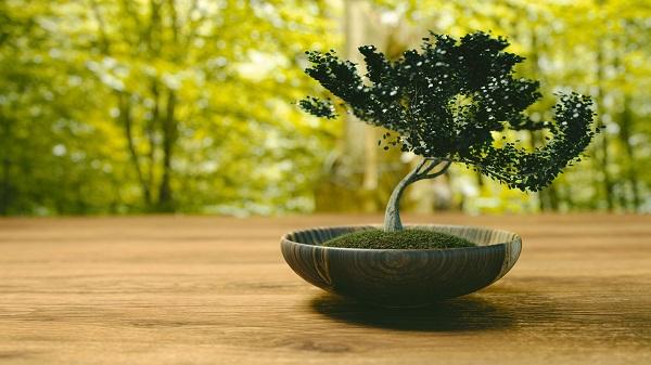 zakupy-roślin